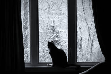 Window Watching by MarquessaPhotography