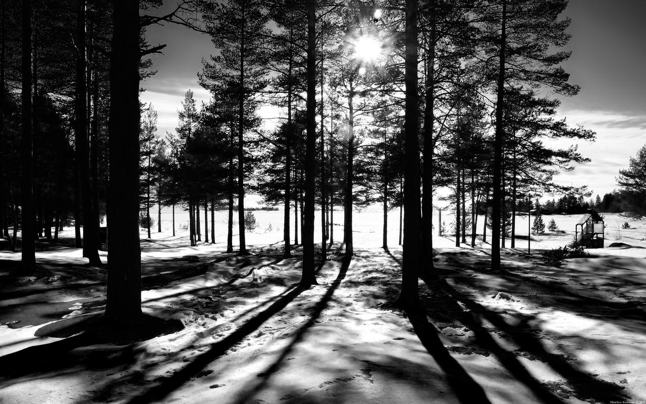 Forest Light - WP by hquer