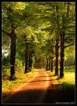 Morning Road...