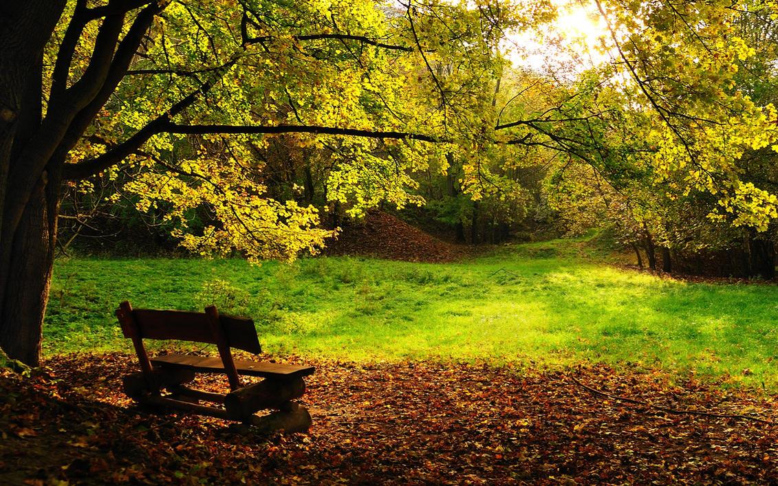 Autumn... by hquer