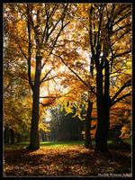 Park by hquer
