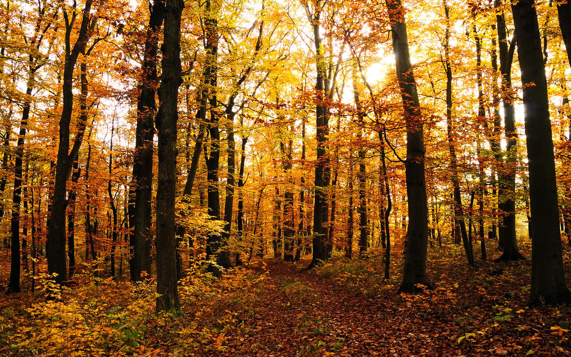 fall woods backgrounds wallpapers - photo #4