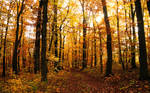 Autumn in the Woods 2