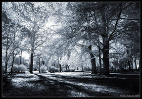 Autumn - IR by hquer