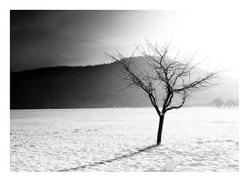 Tree by hquer