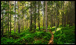 Forest Path by hquer