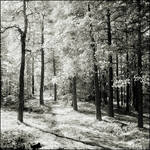 Magic Forest IR