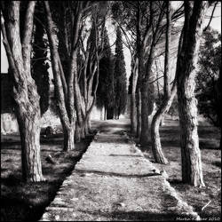 The Garden by hquer