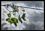 Frozen Life by hquer