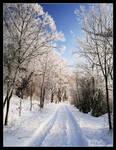 Winter Walk by hquer