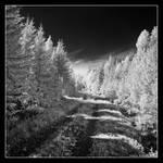 Path by hquer