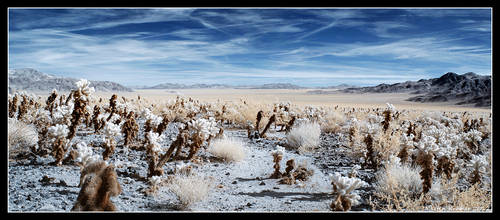 Joshua Tree National Park - Infrared by hquer
