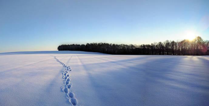 Winter Magic (Nexus 5X)