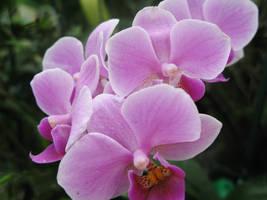 Taste of Spring by undefinedRomance