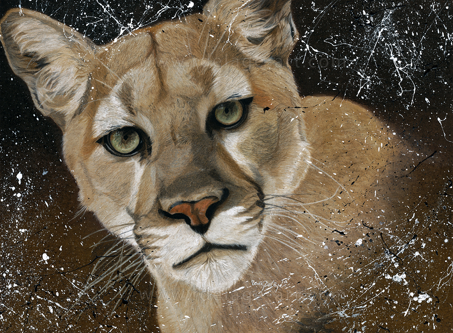 Mountain Lion by Fayeren
