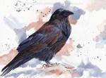 Raven - Watercolor Portrait
