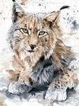 Lynx - Watercolor Portrait