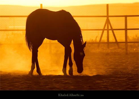 Dancer Horse