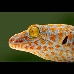 Spothead by biawak