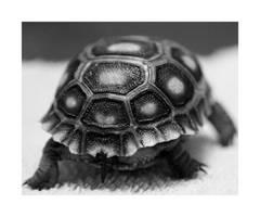 Turtle Butt by romirose22