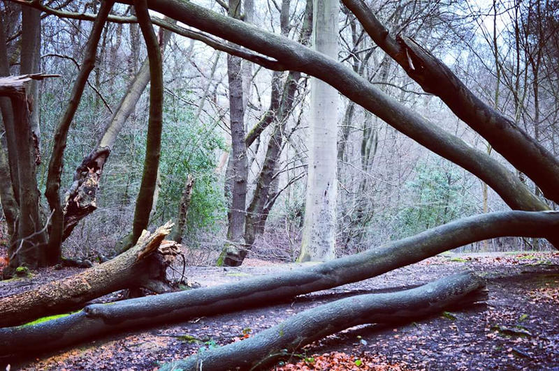 Damaged Trees by StevenARTify