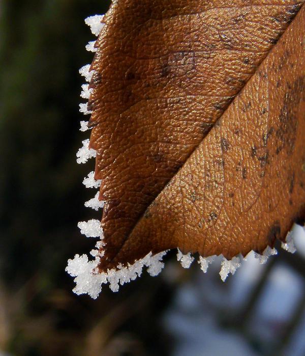 Frost by Fliu