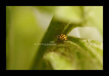 Lost - the little guy... by en-tyrael
