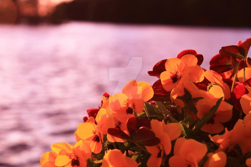 waterscape with flowers by xXxSheLovesHexXx