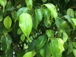 RaiN: Chlorophyll by Nickster19