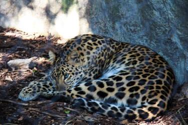 Leopard Woke Up by firecloak