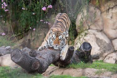 LSU Tiger Mike VI by firecloak