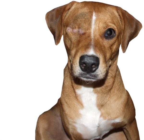Image Result For Can Dog Parvovirus