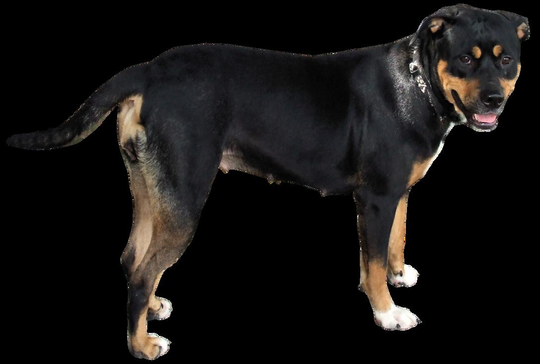 Moxie the Oxie - Huge Dog by DamselStock on DeviantArt
