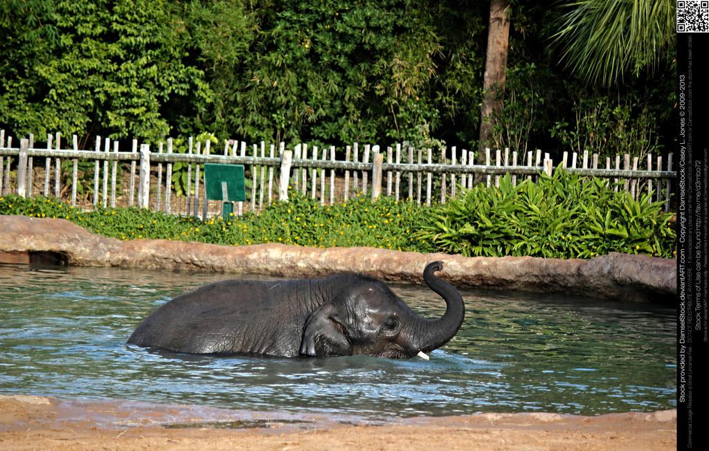 Baby Boy Elephant Nursery Decor