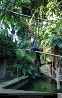 Hyacinth Macaw 6 by DamselStock