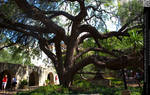 Ancient Huge Tree