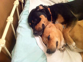 Pixie and Moxie (Rest in Peace, Moxie)