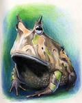 Ceratophrys