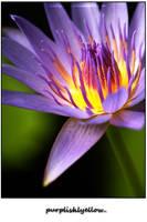 purplishlyellow.. by herryhewy