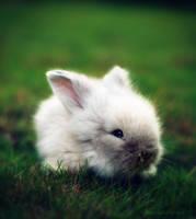 the whitest rabbit alive 2..