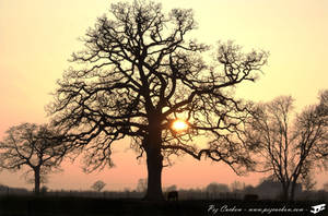 Silhouetted Tree by Pezmc