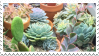 succulent stamp by sugarfawns