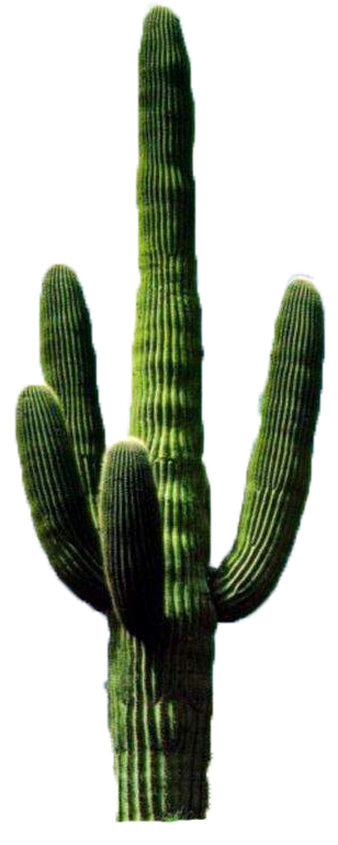 PNG Cactus by BYJU84