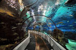 Underwater walkway by cristidev
