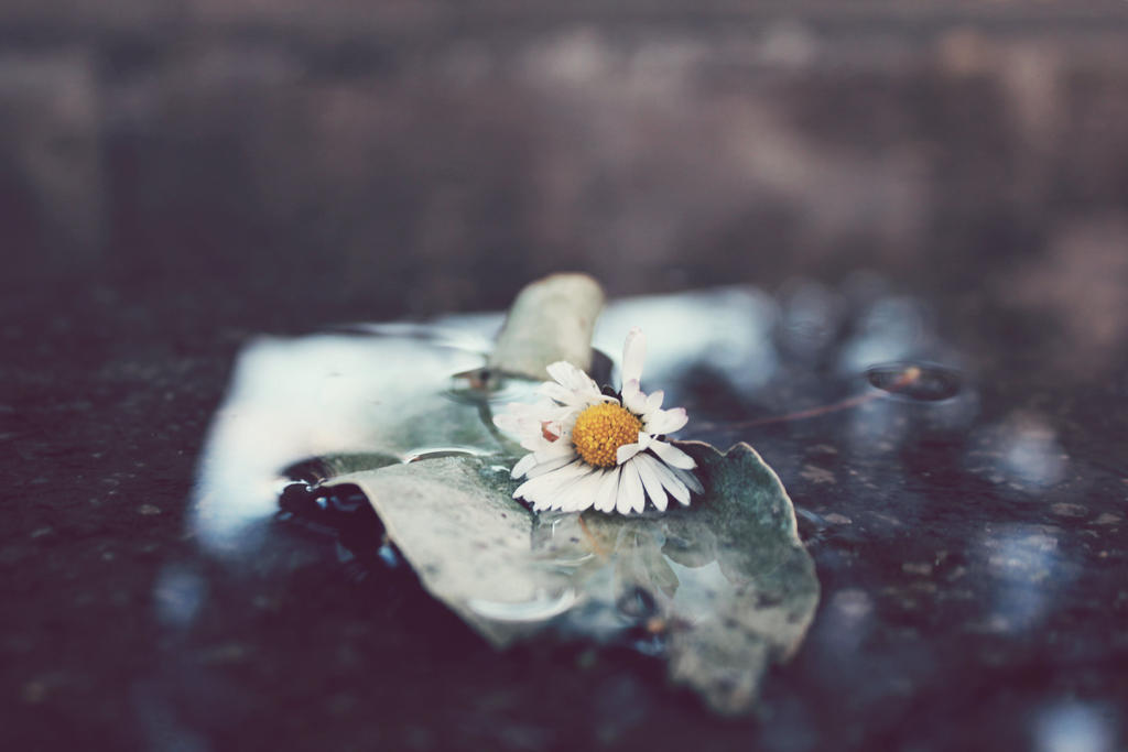 flower wet water by AVENGED7X