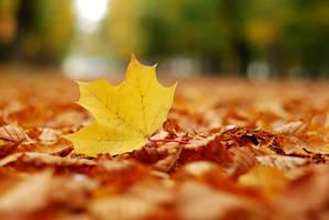 Autumn color by razvi9