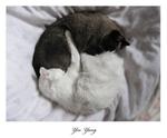 Yin Yang by yasincrow