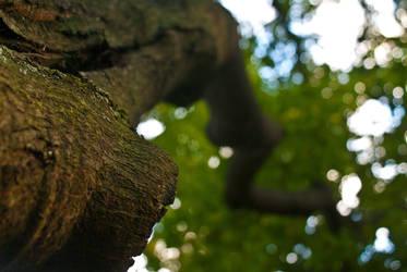 Magical Tree by yasincrow