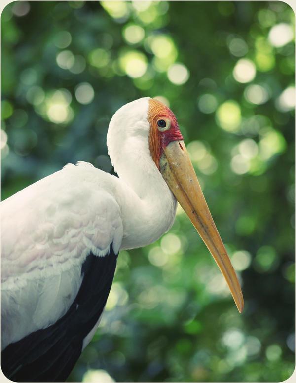 long beak birds birds of prey