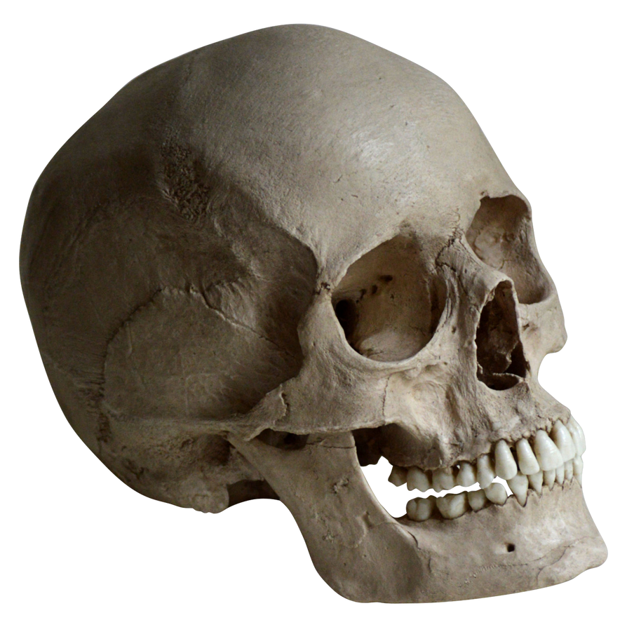 unrestricted hq skull 1 by aio350